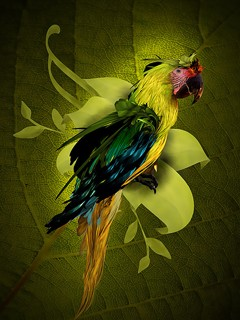 Creative wallpaper for mobile HTC 240*320 animals