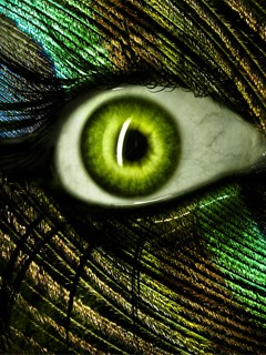 Creative pic for mobile Gigabyte 240*320 eyes