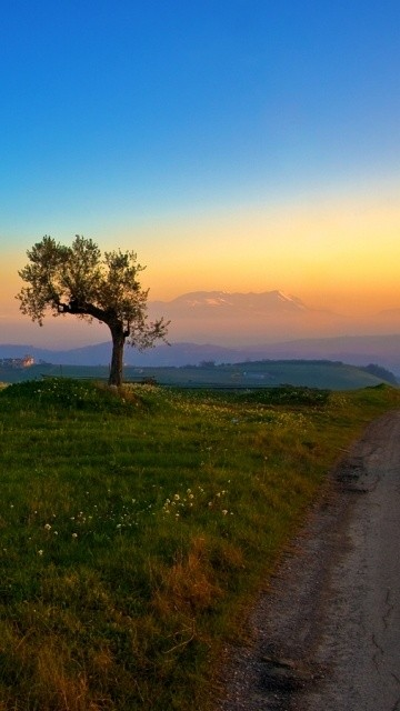 Beautiful nature pic for smartphone Asus 360*640
