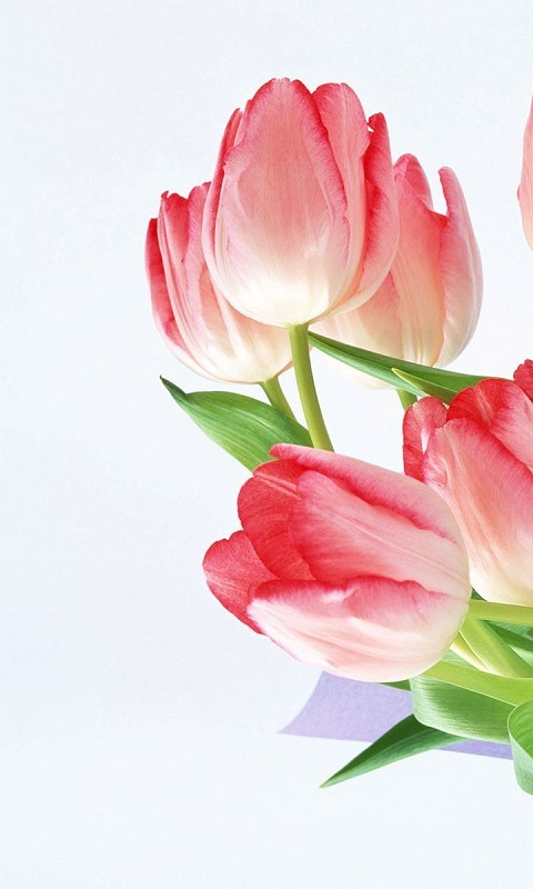Beautiful screensaver for smartphone Vodafone 480*800 flowers