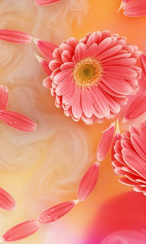 Modern background image for mobile Vodafone 480*800 flowers